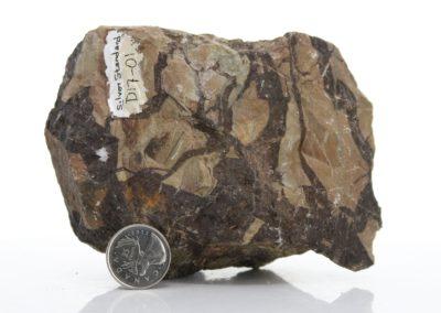Siderite cemented breccia (D17-01)