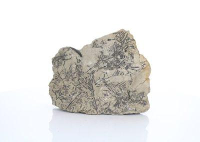 AME 417 Fossil Fern